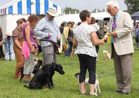 Campanion dog show